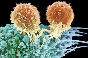 Рак и пересадка органов